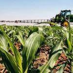 Plantação de milho em Goiás: a área a ser cultivada na segunda safra brasileira de milho é estimada em 8,130 milhões de hectares - Cristiano Mariz/EXAME