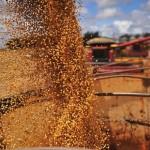 Aumento da produção de soja deve ser um dos fatores de crescimento do agroengócio em 2015 (Foto: Ernesto de Souza/Ed. Globo)