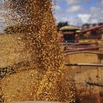 Rio Grande do Sul deve ter mais soja e menor milho na próxima safra (Foto: Ernesto de Souza/ Editora Globo)